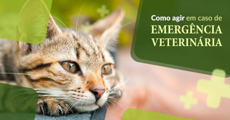 Como agir em caso de emergência veterinária