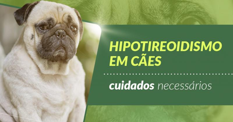 Hipotireoidismo em cães