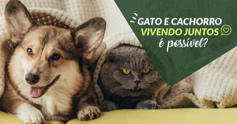 Gato e cachorro vivendo juntos, é possível?