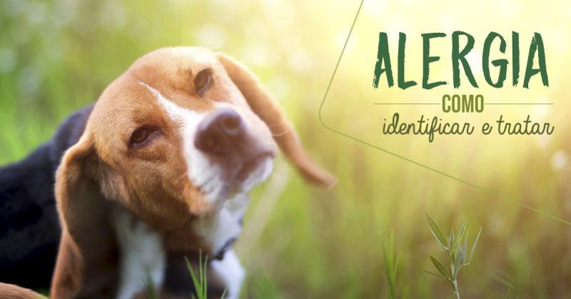 Alergia, como identificar e tratar?