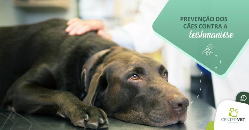 Prevenção dos cães contra a leishmaniose