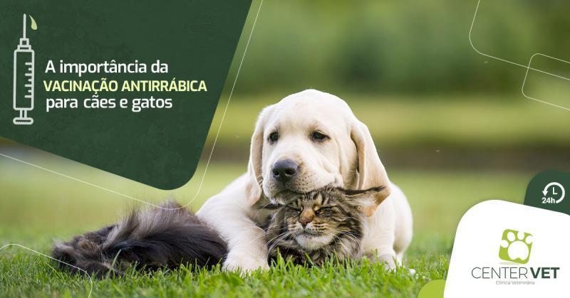 A importância da vacinação antirrábica para cães e gatos