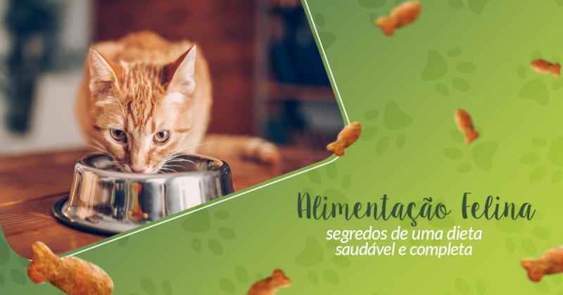 Alimentação Felina