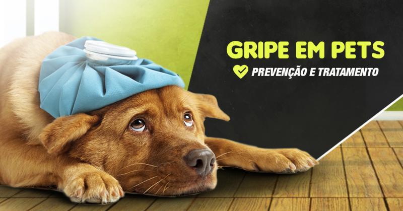 Gripe em Pets - Prevenção e Tratamento