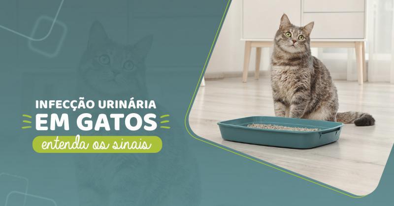 Infecção urinária em gatos: entenda os sinais.