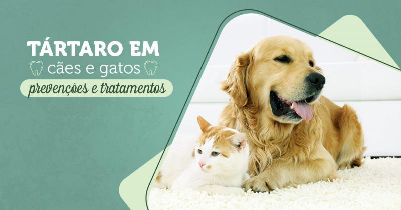 Tártaro em cães e gatos: prevenções e tratamentos