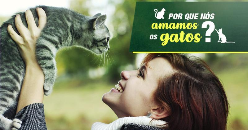 Por que nos amamos os gatos?