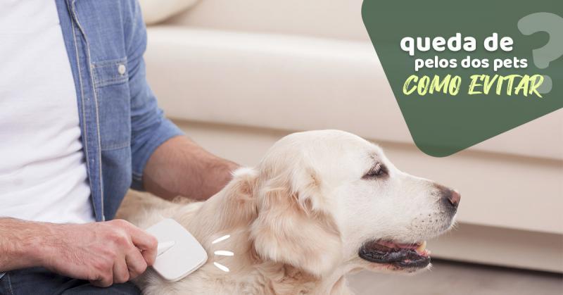 Queda de pelos dos pets: Como evitar?