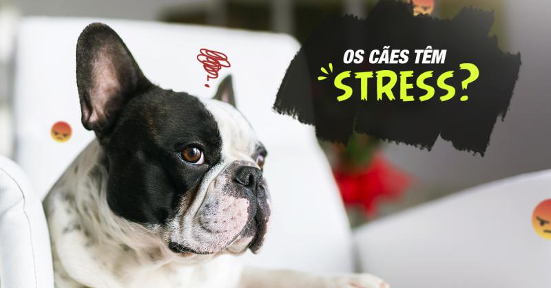 Os cães têm stress?