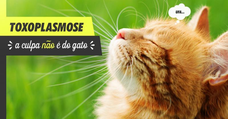 Toxoplasmose - A culpa não é do gato