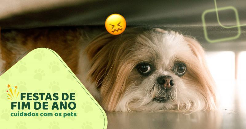 Festas de fim de ano: Cuidados com os pets