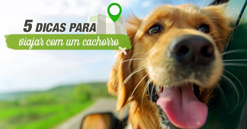 05 Dicas para Viajar com cachorro