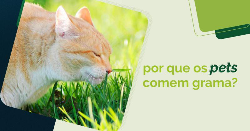 Por que os pets comem grama?
