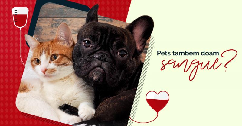 O seu pet também pode doar sangue e salvar outras vidas!