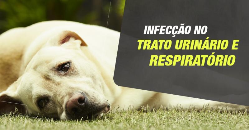 Infecção de trato urinário e respiratório