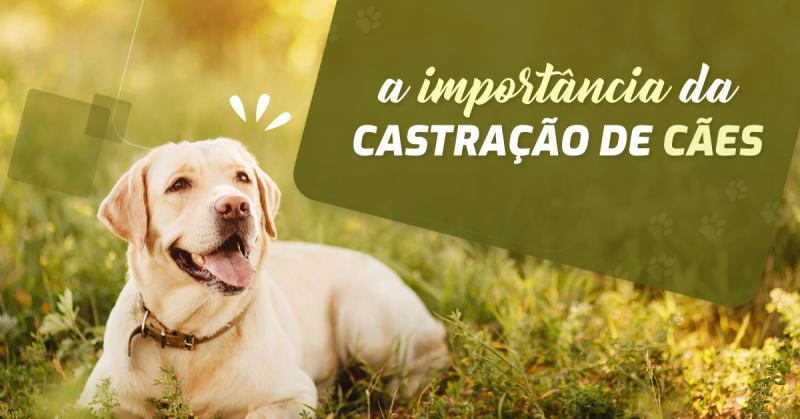 A importância da castração de cães