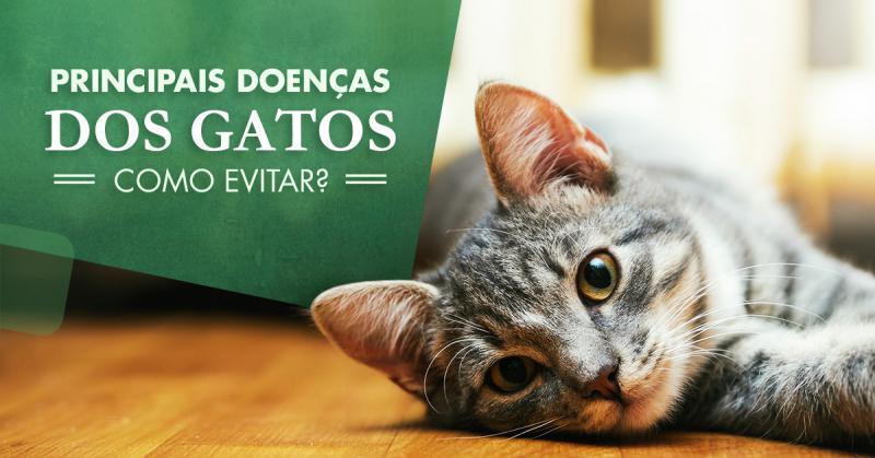 Principais doenças dos gatos