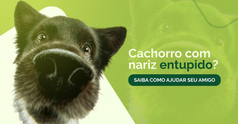 Seu cachorro sofre com o nariz entupido? Saiba como ajudá-lo