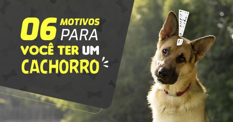 06 Motivos Para Você Ter Um Cachorro
