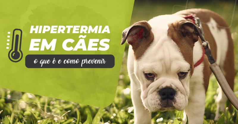 Hipertermia em cães