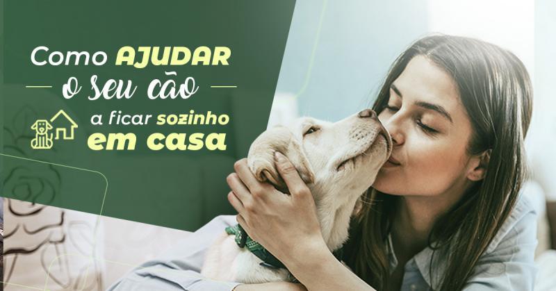 Como ajudar o seu cão a ficar sozinho em casa