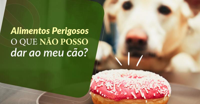 Alimentos perigosos: o que não posso dar ao meu cão?